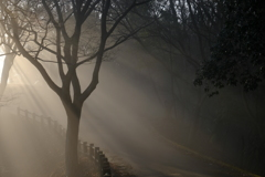 朝日射す山道