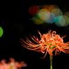 彼岸花と灯 その3