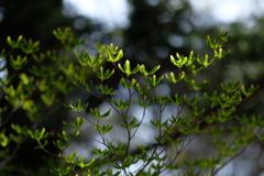 高原の芽吹き3