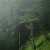 霧の森 その2