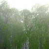霧の朝 その5