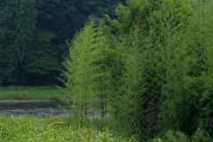 夏の川辺2