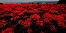 紅色の芸術