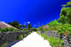 白い珊瑚の一本道は♪