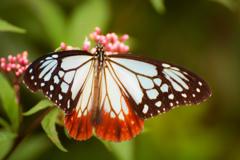 海を渡る謎の蝶2