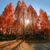 紅いツリー