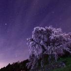 又兵衛桜と輝く星空