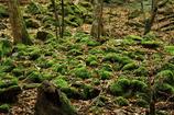 野生の苔玉