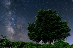夏の夜空と一本桜