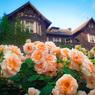 薔薇ハウス