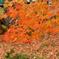 裏磐梯の紅葉