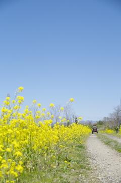 道端の花畑