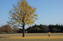 落ち葉も遊び道具