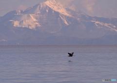 琵琶湖冬景