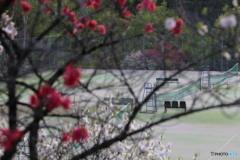 花桃の里   テニスコート
