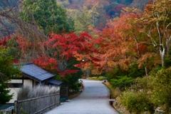紅葉をくぐる公園の小径