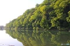 新緑を映す京都 桂川