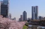 東京 市ヶ谷 外濠附近