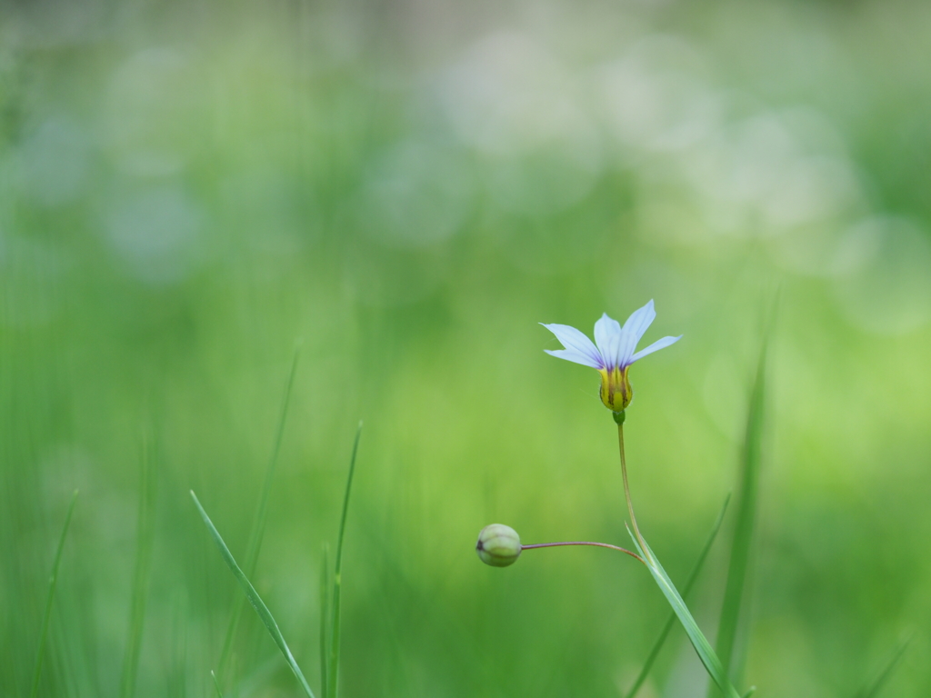小さな願い
