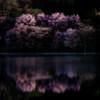 明け方の中綱湖