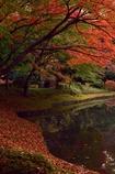 池の畔にて