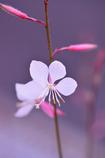 名も知らぬ花2