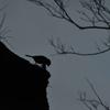 野鳥シルエット