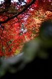 屋根むこうの紅葉