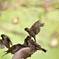 雀の楽園2