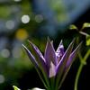 鎌倉で出会った花々5