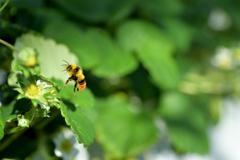 花粉を運ぶ