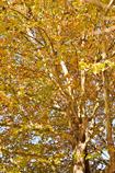 画面いっぱいの秋