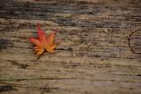 木のベンチに一片