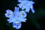 鎌倉で出会った花々8