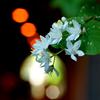 鎌倉で出会った花々3