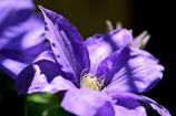 鎌倉で出会った花々4