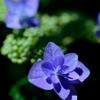 鎌倉で出会った花々6