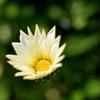 名を知らぬ花1