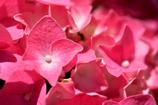 鎌倉で出会った花々7