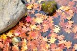 紅葉のパレット