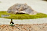 石庭を臨む