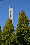 ポプラを超える塔