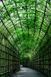 緑のアーチ