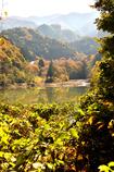 茂みより湖に流れ込む川(タイトル変更)