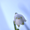 ゆらめく白い花