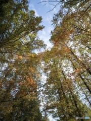 スマホで撮影する秋