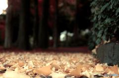 静かなる小路