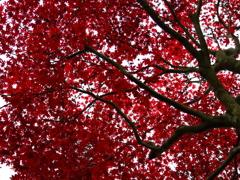 紅で塗りつぶす
