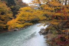 多摩川の黄葉