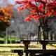 秋の日 ♪